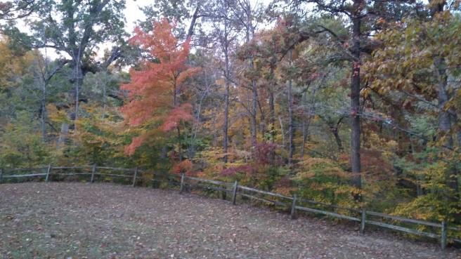 Fall Foliage Lapping Park