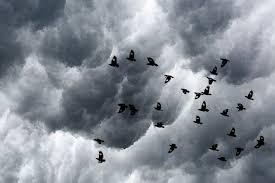 How Do Hurricanes Affect Birds?